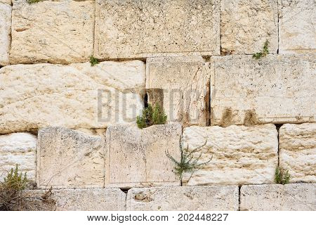 The Western wall or Wailing wall is the holiest place to Judaism in the old city of Jerusalem Israel.