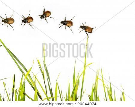 flora and beetles against white background. useful design element. poster