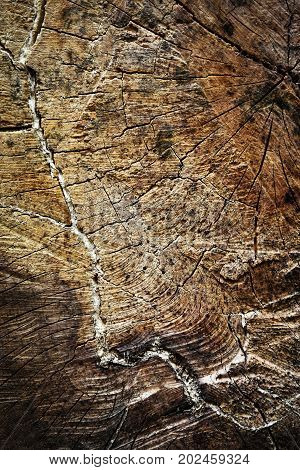 nature background or texture detail felled the wooden stump