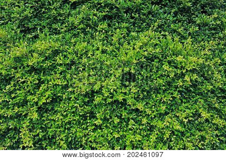 Image of fresh green leaves for background