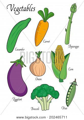 Vegetables set with cucumber, carrot, asparagus, eggplant, broccoli, onion, peas. illustration isolated on white background. Vegetables vector object for for design, web, labels and advertising