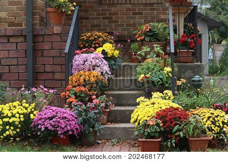 Way to the main entrance stair of the stylish house decorated by colorful potted flowers for autumn holidays season.
