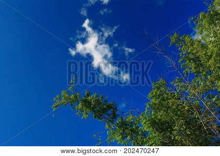 The Bamboo Tree And Blue Sky