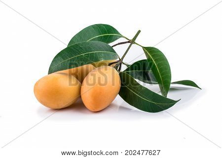 Sweet Marian Plum Thai Fruit