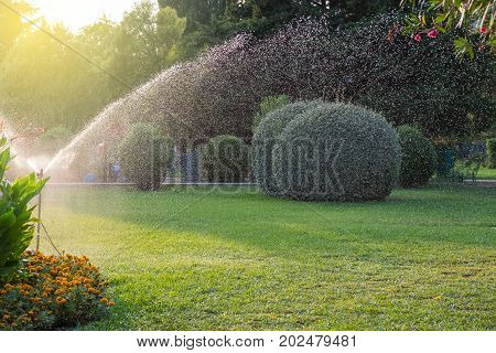 Sprinkler system watering the lawn with water drops caught in the air with hi shutter speed. Drought, limited water supply conceptual background