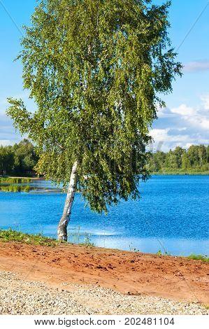 Summer Russian landscape with a birch near the Volga River.