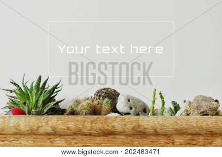 Succulents and cactus on a gray background. Copy space for your text. Houseplants background.