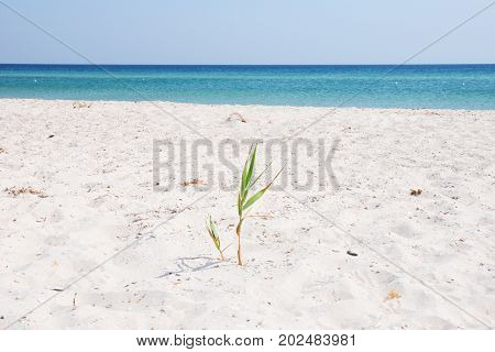 Sea beach sand landscape with grass on the background of the seashore.