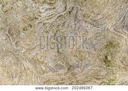 a full frame macro Muschelkalk limestone closeup
