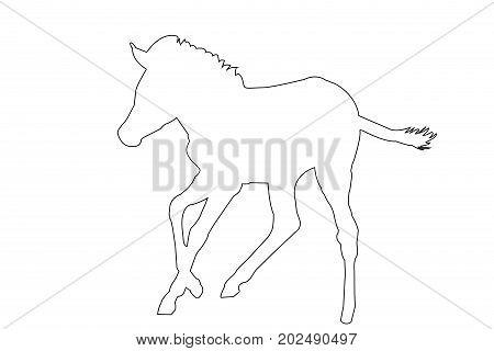 Outline of an african Zebra - digitally handdrawn illustration on white background