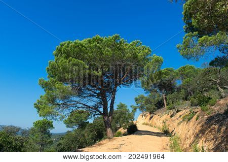 Landscape in Spanish Costa Brava