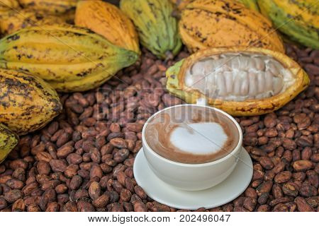 Hot Cocoa With Cocoa Beans And Cocoa Fruits