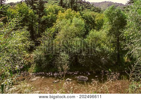 Mountain river Derbent with muddy water and stones among the trees of Armenia
