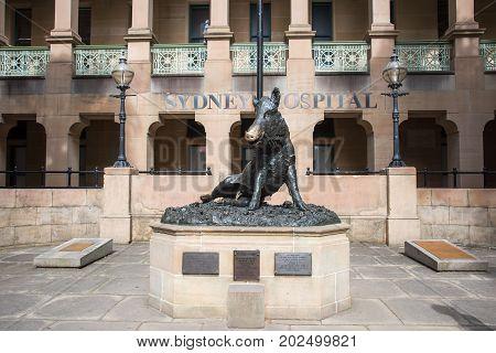 SYDNEY,NSW,AUSTRALIA-NOVEMBER 20,2016: Wild boar statue and fountain outside the Sydney Hospital in downtown, Sydney, Australia.