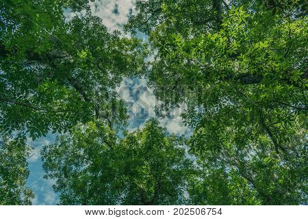 looking up at the blue sky through green leafy tree branches on a summer afternoon
