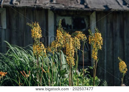 Plants on the background of a wooden shed. Photo in the daytime.