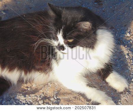 A tuxedo cat laying on gravel looking to the side