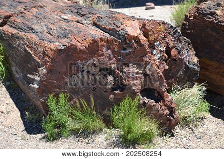 large pieces of petrified trees in northern Arizona's petrified forest / painted desert national park