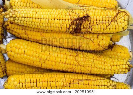 Boiled Corn On An Aluminum Tray. Corn Near. Closeup Of Corn. Yellow Boiled Young Corn, Useful And Ta