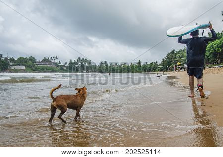 A dog and a surfer on the beach Galle Sri Lanka