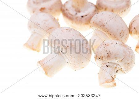 Fresh mushrooms champignons on a white background