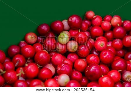 Forest cranberries healthy on a green background. Autumn edible useful berries. Natural food of wild nature, rich in vitamins. Fall season of picking berries in Northern Europe and the tundra.