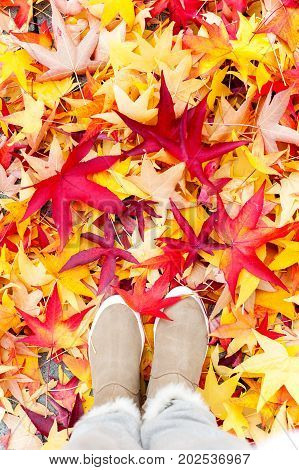 Autumn. Looking at plenty colorful maples leaves and modern woman boots from above. Fall season background. Vibrant outdoors vertical image.