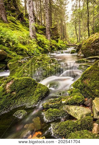 A small waterfall in a green forest with water, rocks, moss and ferns, Norway, vertical image
