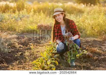 young woman gardener with beet root in garden. Young farmer harvesting beet. Gardening, agriculture, autumn harvest concept