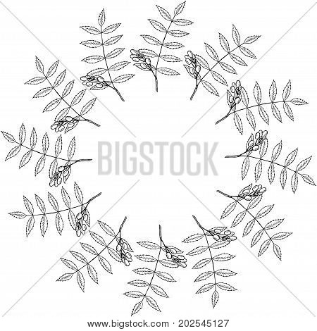 Neem or nimtree, medicinal plant. Ayurvedic Herb. Hand drawing ink illustration. Design for essential oil, natural cosmetics, treatment, aromatherapy, homeopathy. Border for print, poster logo label