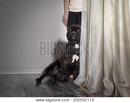 Funny dog and baby hiding behind that curtain