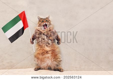 The Big Shaggy Cat Is Very Funny Standing.flag