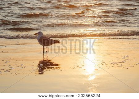 Gull bird hunting on the sea beach. Landscape with bird, beach, sea waves and reflection of the sun.