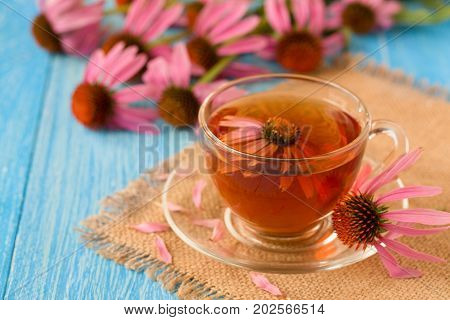 Cup of echinacea tea on blue wooden table.