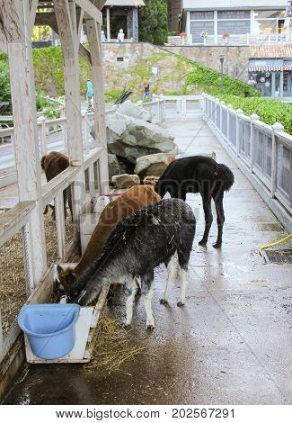 Yalta, Crimea - 11 July, Feeding in the aviary animals, 11 July, 2017. Zoo and animals on the territory of the hotel Yalta Intourist.