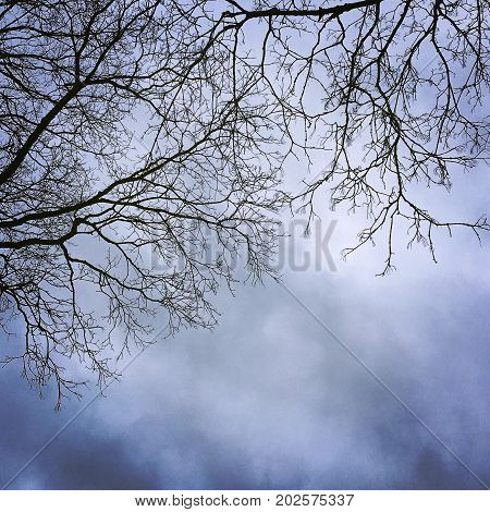 Fascinating and beautiful tree branches with interesting sky.