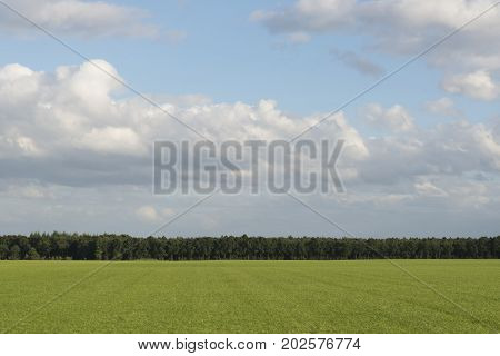 Cloudy skies above extensive lawns with a forest in the Netherlands as a background picture