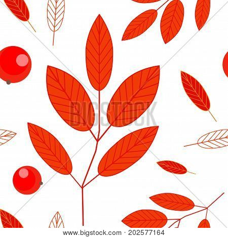 Seamless pattern of berries and red leaves of mountain ash on a white background. Ashberry. Autumn background. Vector