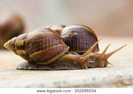 two snail crawling on the marble table
