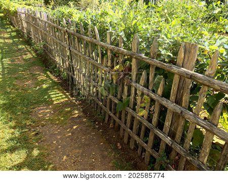 Rustic picket fence enclosing a vegetable garden