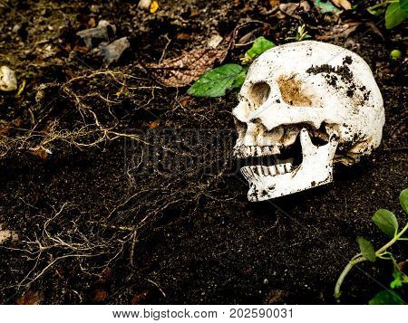 Beside of human skull buried in the soil.The skull has dirt attached to the skull.concept of death and Halloween