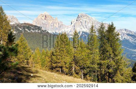 Larch wood and Le Tofane Gruppe Dolomiti Italy