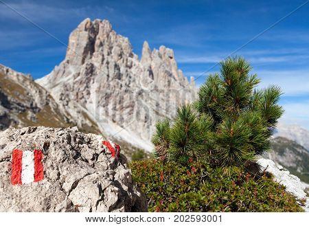 Small pine tree tourist sign and stone and Cima Ambrizzola and Clroda da Lago Italien dolomites