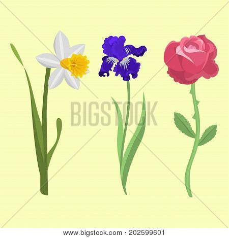 Beautiful spring flower botanical bloom watercolor painting. Summer decoration nature design. Floral drawing leaf blossom vintage vector botanical bouquet.