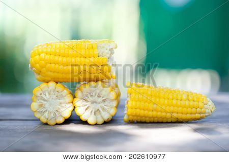 Boiled corn cobs, yellow color seeds Maize macro view. Shallow depth field close-up photo, selective focus. Soft blurred green background