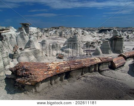 Very large petrified log in Bisti natural area, New Mexico