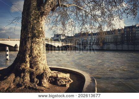 Big old tree on the quai des Tuileries on the Seine river and view of the pont du Carrousel, port des Saints-Peres and quai Voltaire. France. Paris