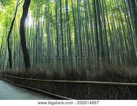 Japanese bamboo forest in Arashiyama, Kyoto, JapanArashiyama () is a pleasant, touristy district in the western outskirts of Kyoto.
