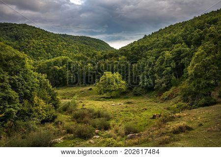 Lonely green tree in the middlle of small valley surrounded by a forest