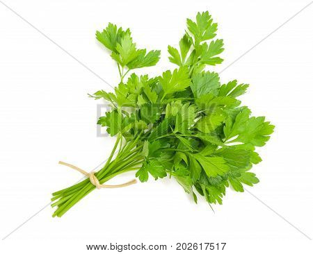 Parsley Bunch Isolated